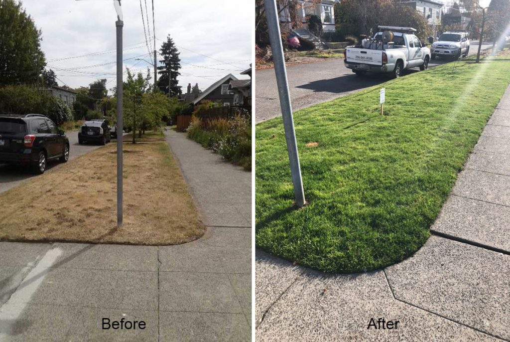 Organic lawn care before and after